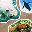旭川動物園に行く旅行ツアー