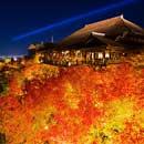 秋の紅葉ツアー特集2019