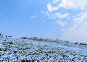 関東から行く、絶対おすすめ!季節別絶景お花畑