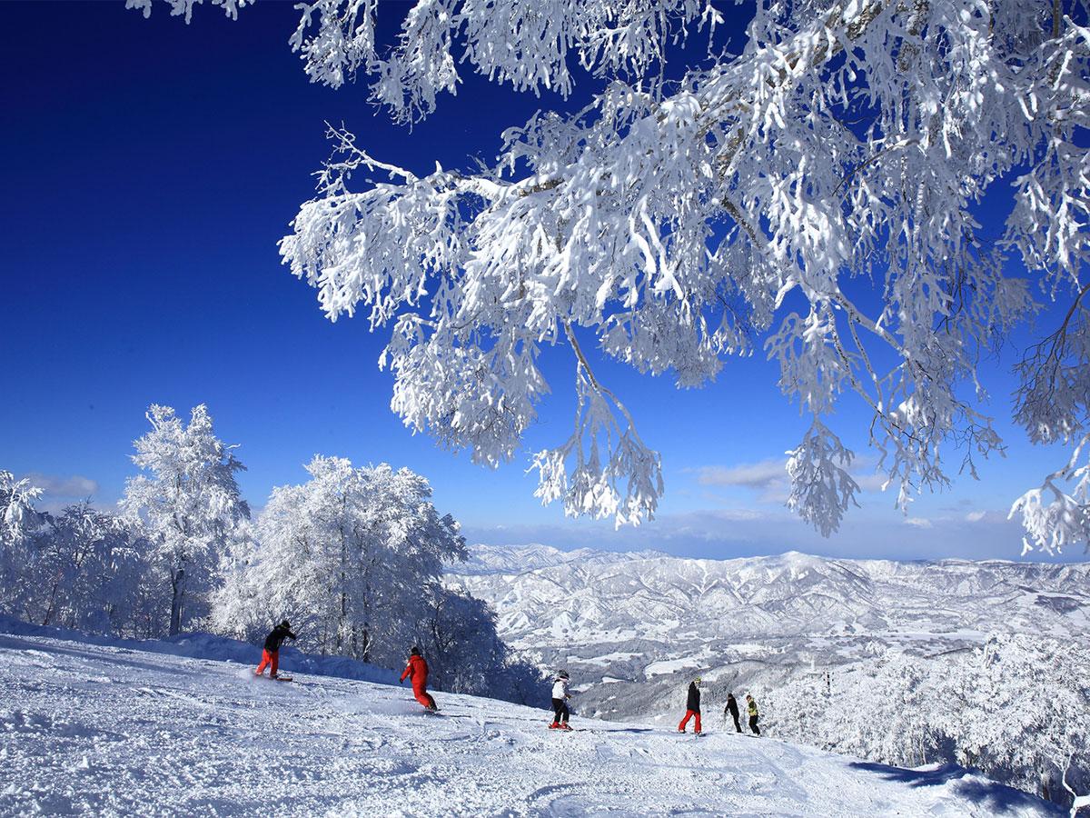 野沢温泉スキー場のゲレンデ写真